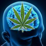 Build a Healthier Brain with the Help of Marijuana