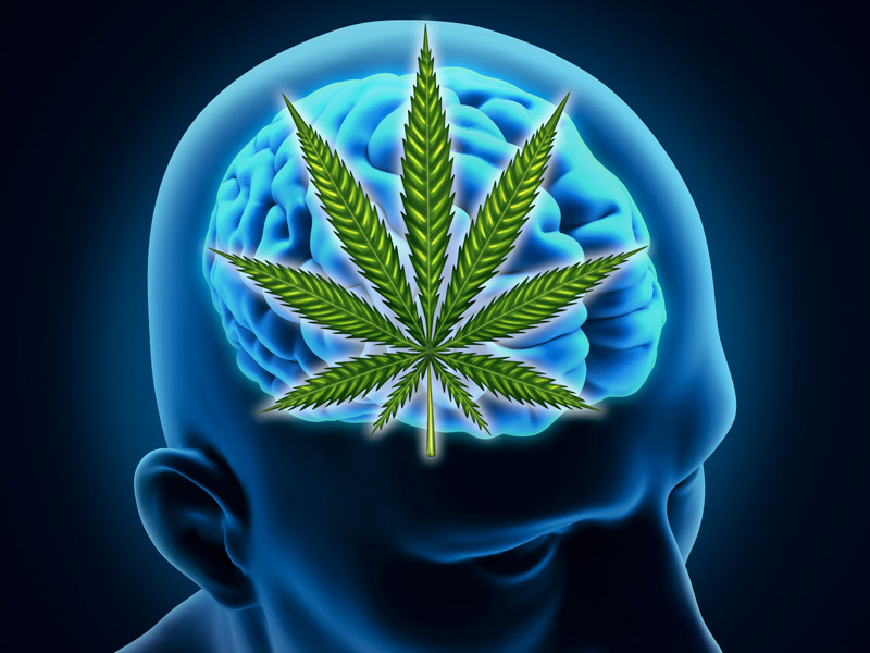 Build a Healthier Brain with the Help of Marijuana