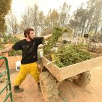 Cultivation of Marijuana on Santa Cruz Mountain