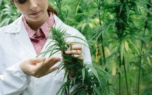 cannabis hiv