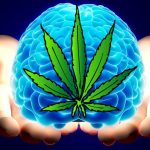 Due to evidence from 3 recent case studies have been showing that marijuana can be able to shrink the aggressive brain tumor