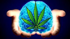 brain tumor marijuana
