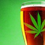 Colorado welcomes marijuana infused beer