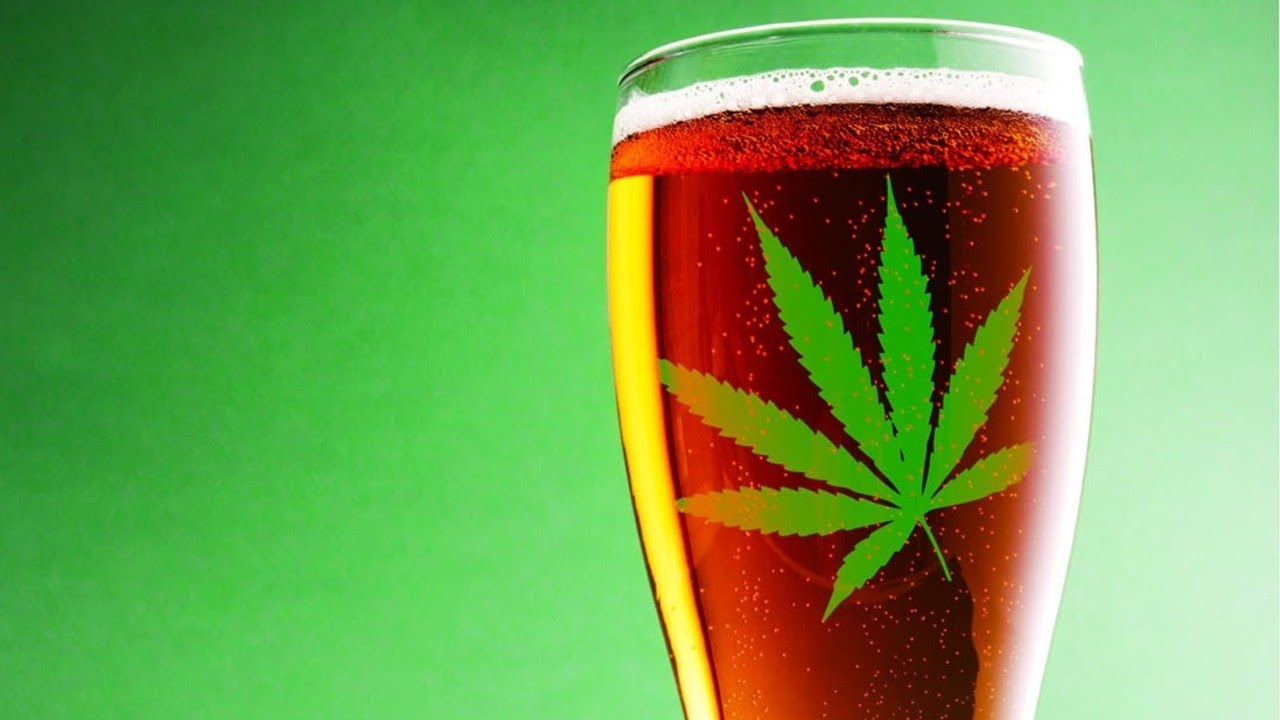 Colorado welcomes marijuana infused beer