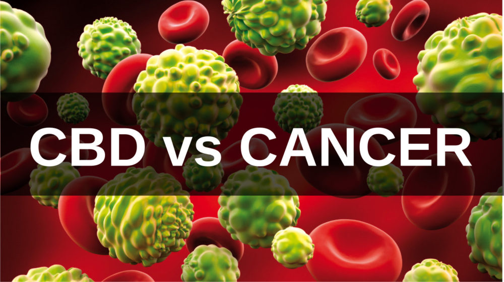 CBD:  The Potential to Kill Cancer and Relieve Treatment Side Effects