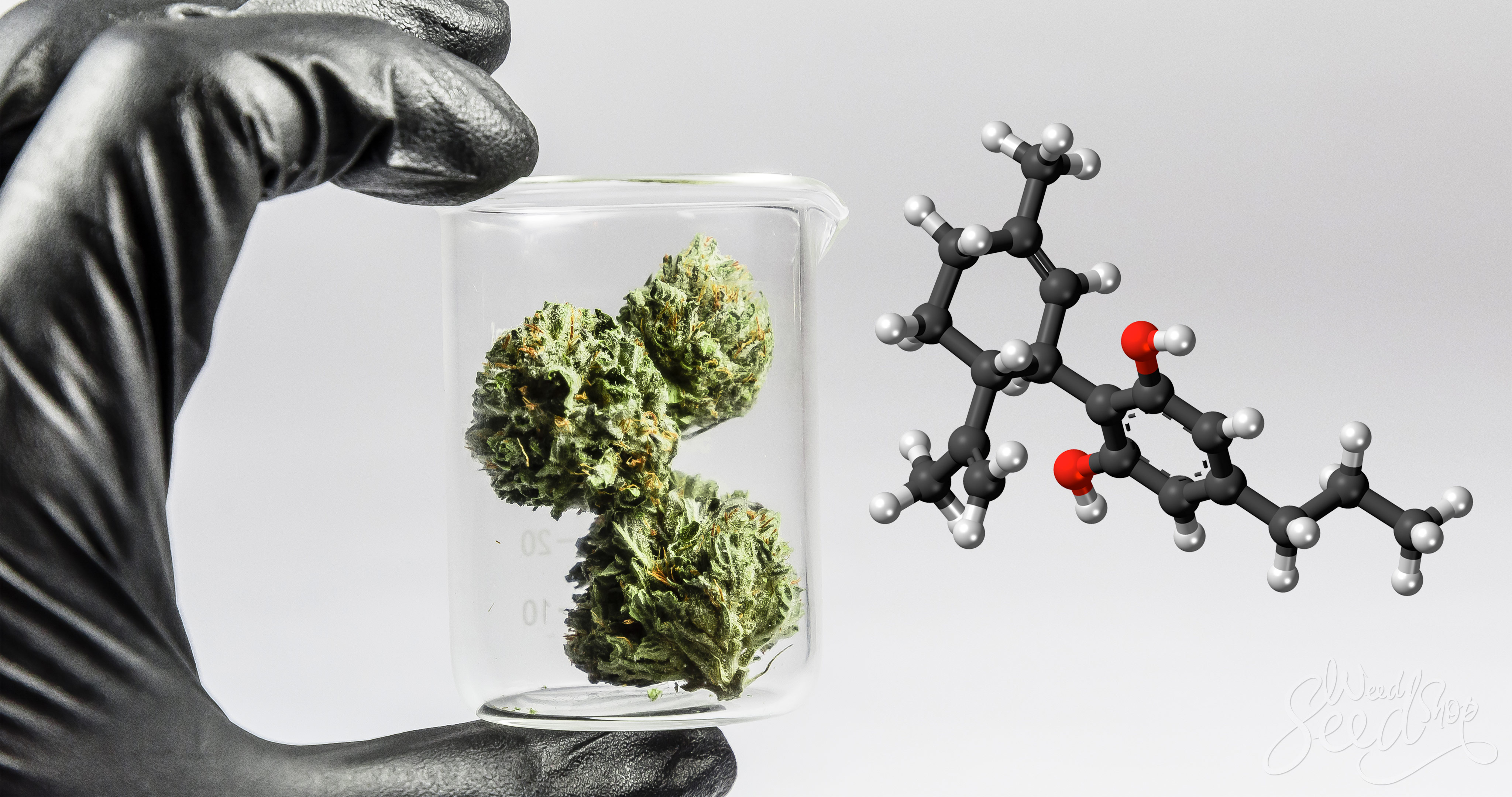 A Guide to Cannabidivarin