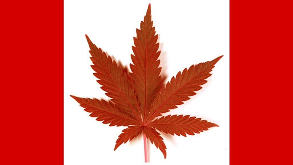 canadian medical marijuana