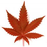 Top 5 Facts About Canadian Medical Marijuana