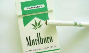 altria marlboro cannabis