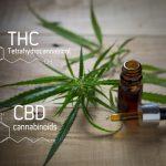 CBD vs. THC: Friends or Foes?