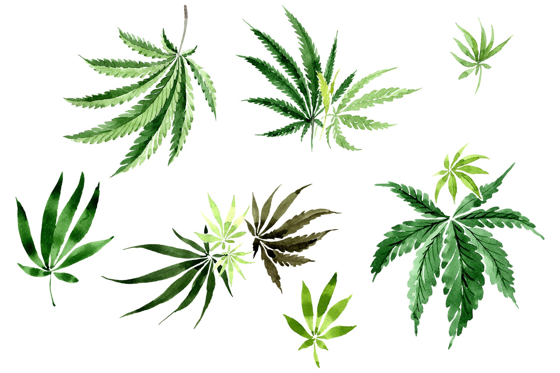 THC, CBD, Oh My! Cannabis Lingo for Beginners