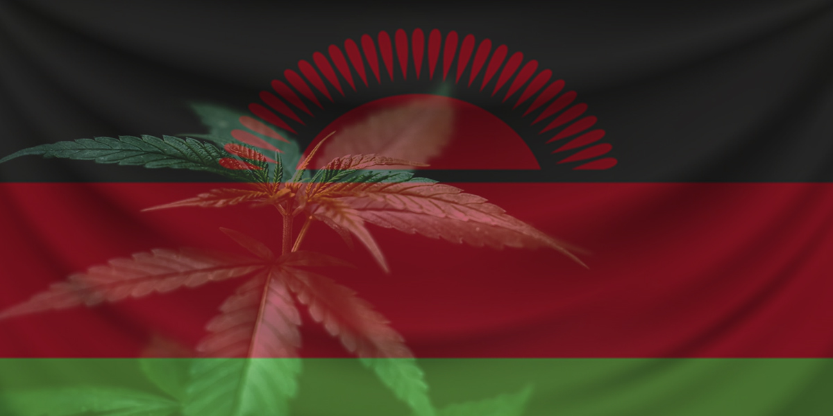 Malawi Just Legalized Medical Marijuana – Here is Everything You Need to Know