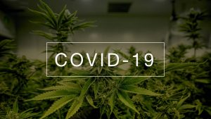 COVID-19 Affected The Cannabis Industry