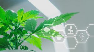 Grow Green Cannabis